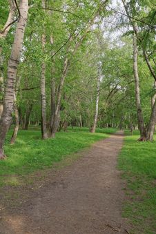 Free Path In Wood. Royalty Free Stock Photos - 24776498
