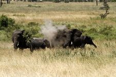 Free Dust Batheing Elephants Stock Photo - 24777990