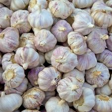 Free Garlics For Sale Royalty Free Stock Images - 24788819