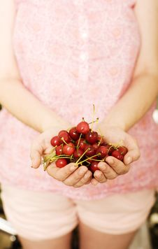 Free Cherries Stock Images - 24793164
