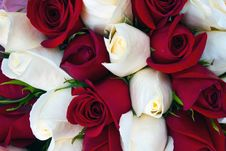 Free Close Up Of Red And White Roses Royalty Free Stock Image - 24797686