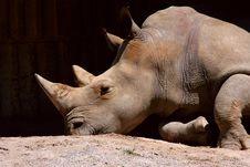 Free Rhinoceros Royalty Free Stock Image - 2481346