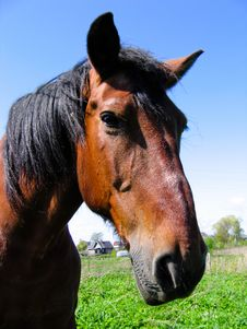 Free Horse Head Stock Image - 2481541