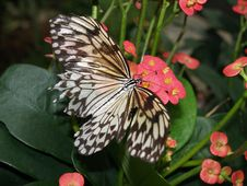 Free Butterfly On Pink Flower Royalty Free Stock Images - 2483369