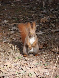 Free Animal Royalty Free Stock Image - 2486206