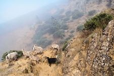 Sheep On A Rocky Slope Royalty Free Stock Photography