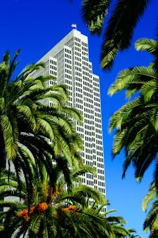 Free Palm Trees And Skyscrapers Royalty Free Stock Photos - 2488378