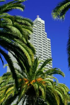 Free Palm Trees And Skyscrapers Stock Photo - 2488380