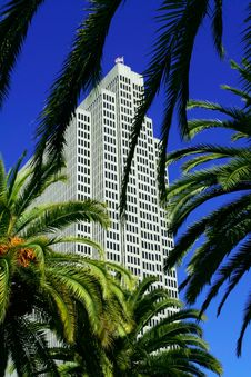 Free Palm Trees And Skyscrapers Royalty Free Stock Photography - 2488397
