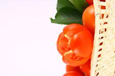 Free Tomato Stock Image - 2489681