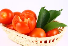Free Tomato Royalty Free Stock Photo - 2489685