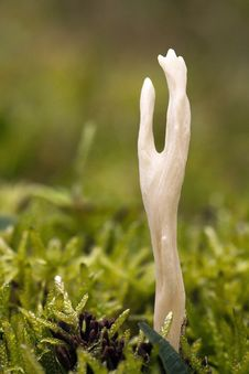 Free Mushroom Macro Royalty Free Stock Photos - 24806728