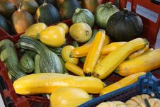 Free Freshly Picked Courgettes. Stock Images - 24810654
