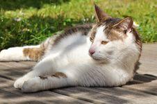 Free Cat On Terrace Stock Image - 24817831