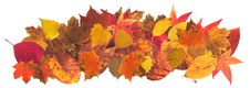Free Autumn Leaves2 Royalty Free Stock Photo - 24819205