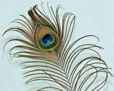 Peacock Feather On A Green Backgrou Stock Photo