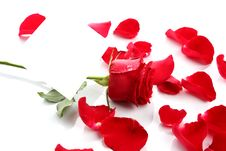Free Beautiful Red Rose Petals With Blank Paper Royalty Free Stock Photos - 24825408