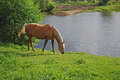 Free Horse Near Pond Royalty Free Stock Image - 24830926