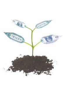Free Money Tree Stock Images - 24837224