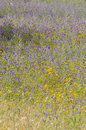 Free Texture And Colors, Purple Yellow Wild Flowers, Meadow Stock Photos - 24844063