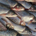 Free A Pile Of Fishes Stock Image - 24848391