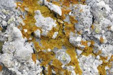 Free Red Lichen Stock Photo - 24840770