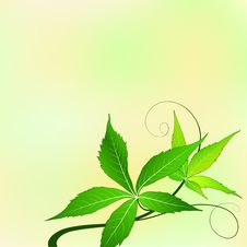 Free Green Leaves Stock Photography - 24841292