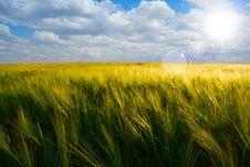 Free Wheat Field Stock Photos - 24841293