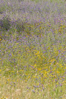 Texture And Colors, Purple Yellow Wild Flowers, Meadow Stock Photos