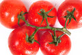 Free Fresh Tomatoes With Drops Stock Photos - 24850493