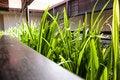 Free Grass At The Balcony Stock Photos - 24855843