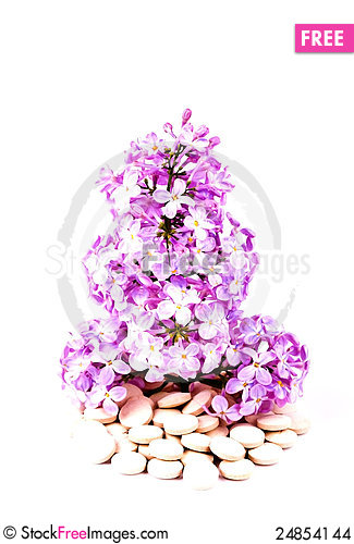 Free Lilacs Or Syrigna Grows From The Tablets And Drugs Stock Images - 24854144