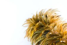 Free Feather Brush Royalty Free Stock Photography - 24851837