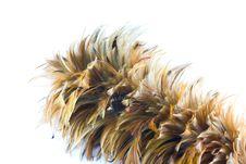 Free Feather Brush Stock Photos - 24851843