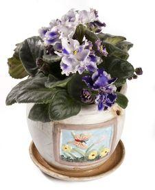 Free Violet Flower Stock Images - 24853304
