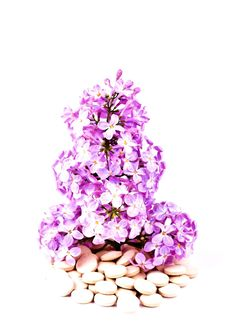 Lilacs Or Syrigna Grows From The Tablets And Drugs Stock Images