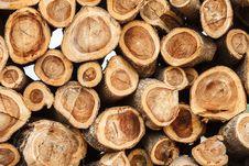 Free Freshly Cut Logs Stock Image - 24854431
