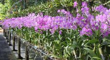 Free Orchid Stock Images - 24856484