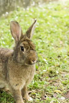 Free Rabbit Stock Photo - 24863240