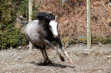 Free Running Horse Royalty Free Stock Image - 24865046