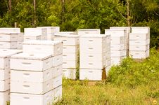 Free Bee Hives Stock Images - 24868134