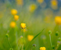 Free Wild Flower Royalty Free Stock Images - 24873149