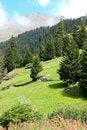 Free Mountain Meadow Stock Photo - 24875550