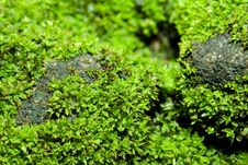 Ant On The Moss Royalty Free Stock Image