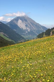Free Mountain Meadow Stock Image - 24875621