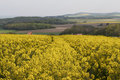 Free Rapeseed Field Stock Image - 24884311