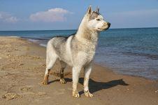 Free Dog Royalty Free Stock Photo - 24881625