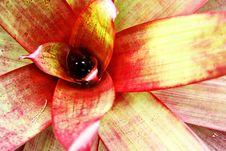 Free Hawaiin Bromelaid Stock Photo - 24882000