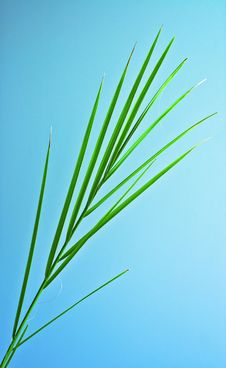 Free Palm Leaf Royalty Free Stock Images - 24882239