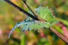 Free Leaf With Dew Stock Photos - 24890363